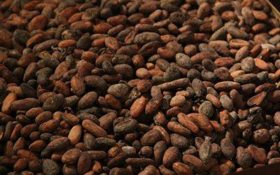 Roher Kakao